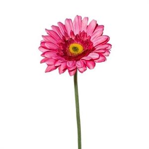 Гербера темно-розовая (искусственная) GL