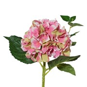 Гортензия зелёно-розовая (искусственная) GL