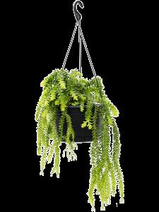 Баранец подвесной 55/28 см (Nieuwkoop Europe)