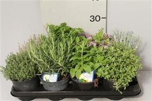 Ассорти пряные травы14/25 (GL)