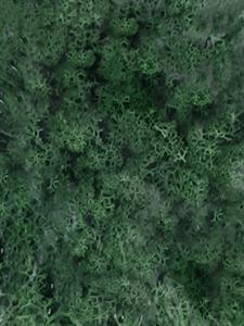 Стабилизированный мох Reindeer moss grass green (примерно. 0,45 m?)