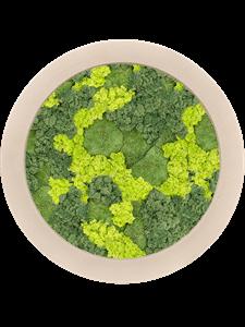 Картина из мха polystone natural 30% ball moss 70% reindeer moss (mix)mix