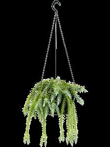 Баранец goebelii подвесной 50/26 см (Nieuwkoop Europe)