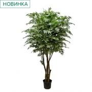 270/РН/400(з.) Клен японский зеленый h270см(латекс)
