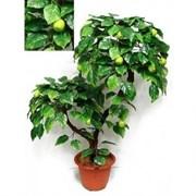 БП 95/2К/44 Бонсай плод. Яблоня (зелен.) 95см