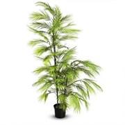 ПК150/2С/426 Пальма кустовая h150см