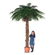 П350/49-6(з) Пальма с плодами кокоса h350см(латекс)
