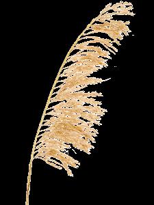 Пампасная трава ветвь (искусственная) Nieuwkoop Europe