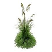 К347/1(з.) Композиция трава Осока на кочке d15см