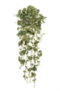 Эйер Саксифрага бело-зеленая ампельная (искусственная)