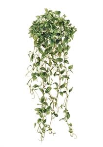 Эйер Традесканция бело-зеленая ампельная (искусственная)
