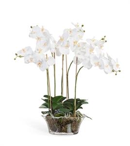 Орхидея Фаленопсис белая в низкой круглой вазе с мхом, корнями, землёй (искусственная)