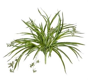 Хлорофитум бело-зелёный куст с ростками (искусственный)